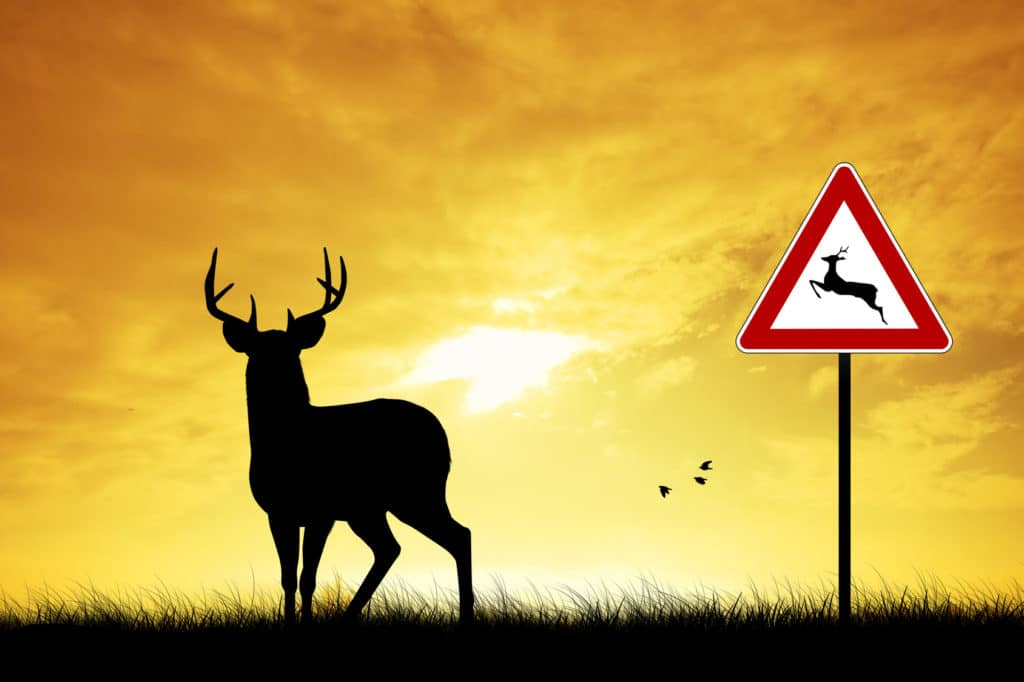 Does My Auto Insurance Cover Deer Accidents?