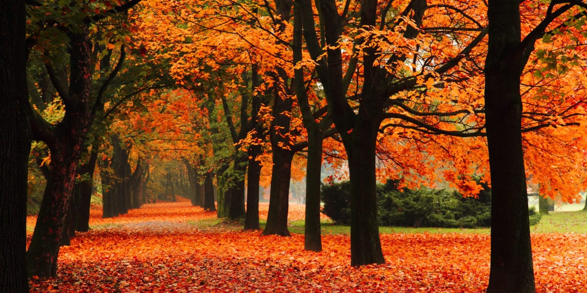 Try These Fun Fall Activities!