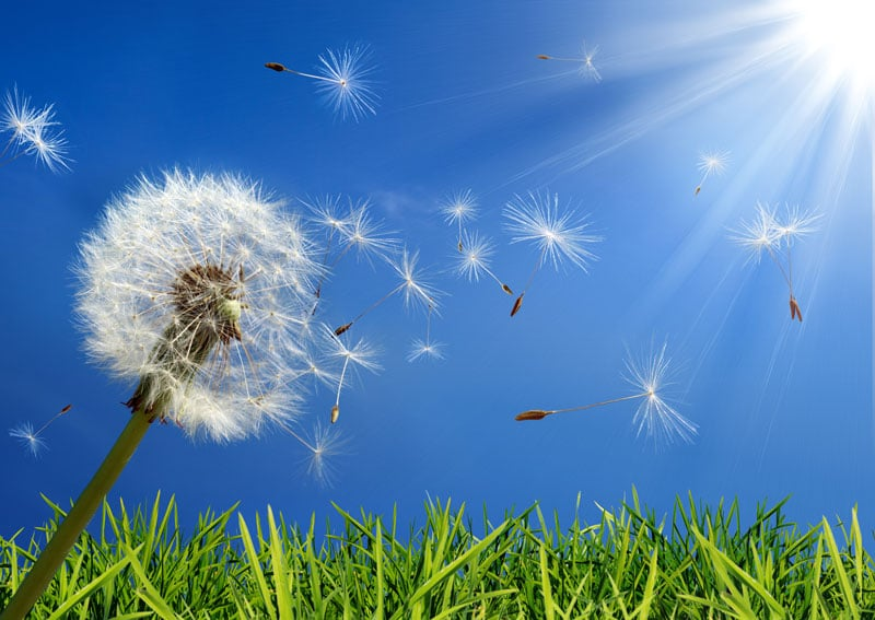 What to Do and What Not to Do During Spring Allergies