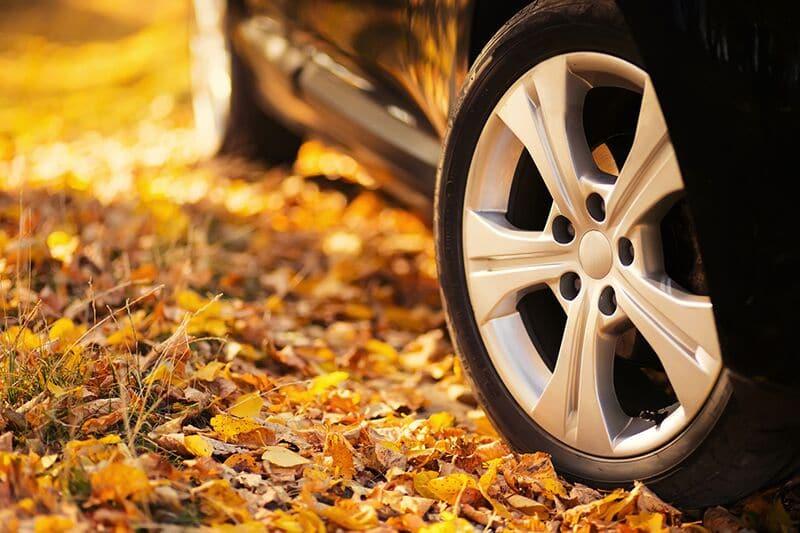 Fall Driving Dangers