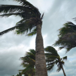 What Small Business Owners Learned This Hurricane Season